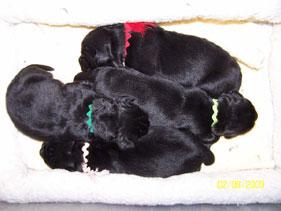 Litter born February 2009